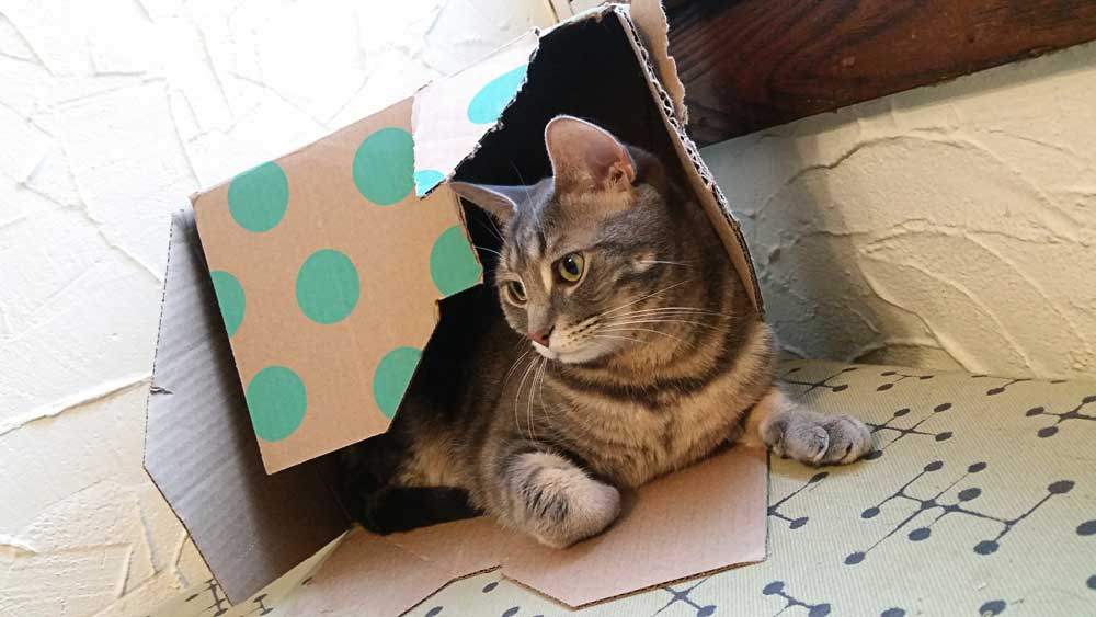 My grey tabby cat Luna happily lying in an old cardboard box